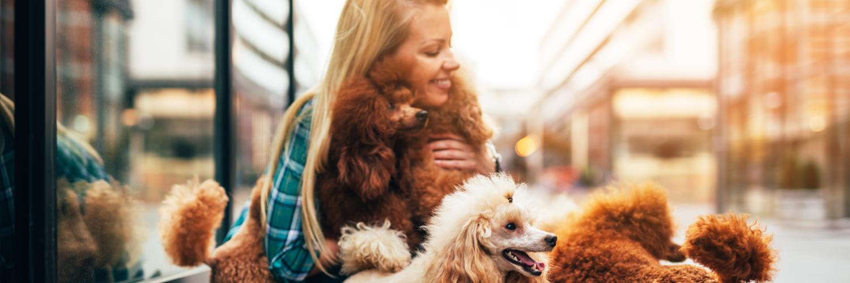 Dog Walker Insurance Massachusetts